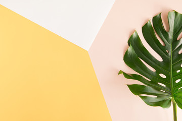 Tropical palm Monstera leaves on summer yellow and pink background. Flat lay, top view Wall mural