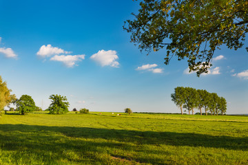 Meadows And Cattle In Spring Near Aachen, Germany