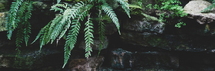 Banner Tropical plants and ferns growing in the rocks , background