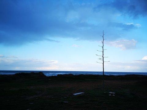 Blue sky and bare tree