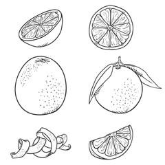 Vector Set of Sketch Orange Fruits.
