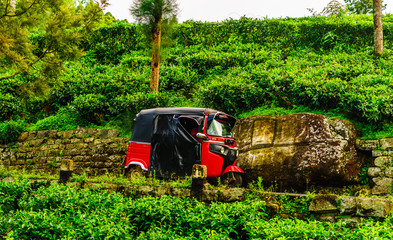 View on red Tuk Tuk on the way to tea plantation in Haputale, Sri Lanka