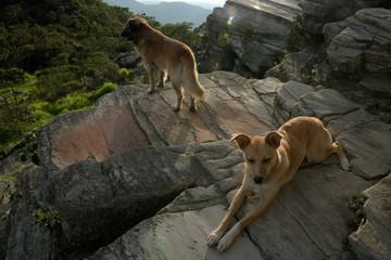 Dogs on the rocks in Brazil