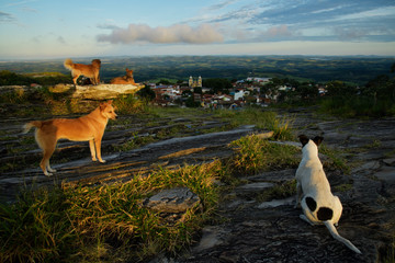 Dogs looking at the town in Brazil