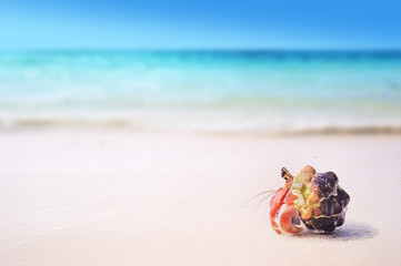 Wall Mural - tropical sandy beach with hermit crab on white sand summer concept background