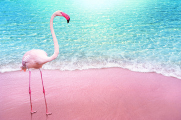 Wall Mural - pink flamingo on pink sandy beach and soft blue ocean wave summer concept background