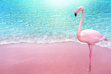 pink flamingo bird sandy beach and soft blue ocean wave summer concept background