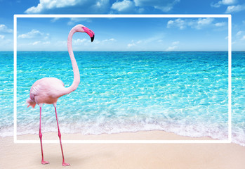 Wall Mural - pink flamingo on sandy beach and soft blue ocean wave summer concept background