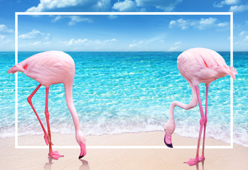 Foto op Canvas Flamingo two pink flamingo on sandy beach and soft blue ocean wave summer concept background