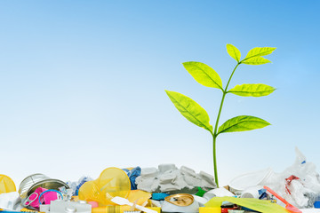 Small green plant grows through plastic trash