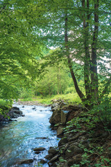 small creek with rocky shore in the forest. trees and boulders on the riverbank. beautiful nature scenery in springtime. vertical view. long exposure