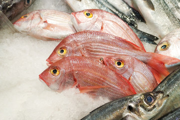 Fresh Pink Sea Bream fish on ice in fish market in Portugal, close up.