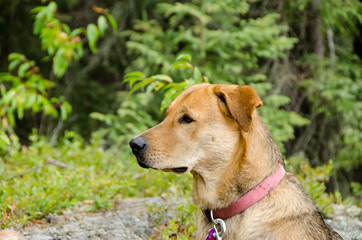 close up of brown dog in forest