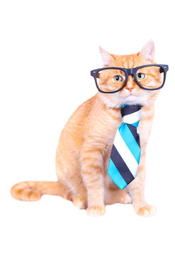 Cat with glasses and tie isolated on white background. Studio photo.