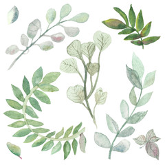 Watercolor set with leaves and branches of medicinal eucalyptus isolated on a white background, hand-painted watercolor. Spring illustration of delicate tropical patterns for beautiful design.