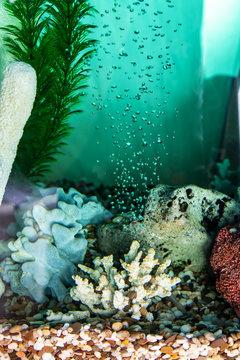 Aeration of water in the aquarium