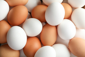 Many chicken eggs as background, space for text