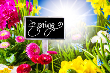 Sunny Spring Flower Meadow, Beautiful Calligraphy Spring