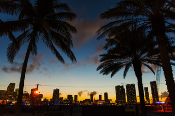 Palm trees with downtown Miami on the background at sunset