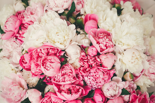 Peonies pattern wallpaper. Beautiful pink and white peony flowers close up. Hello spring. Happy mothers day. International womens day