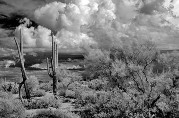 Infrared image Sonora Desert Arizona