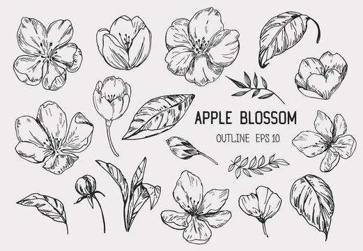 Set of apple flowers. Hand drawn illustration converted to vector. Isolated