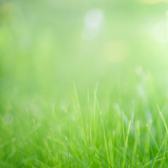 Blurred Nature Summer Spring Green grass Background