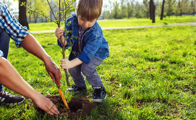 Father with child holding hands. little boy helping his father to plant the tree while working together in the garden. sunday. smiling face. spring time.  volunteer with sprout for growing.