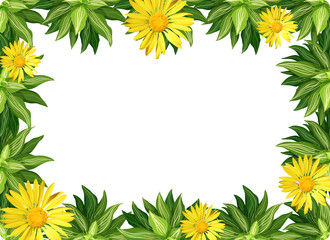 Yellow daisy flower border