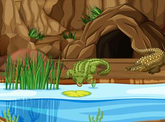 Crocodile at the swamp