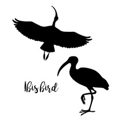 Silhouettes of ibis. Set of icons. Flying and standing bird. Vector illustration.