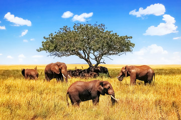 Wall Mural - A group of African savanna elephants against the backdrop of a tree and blue sky in the Serengeti National Park. Africa. Tanzania.