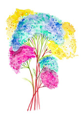 Watercolor illustration of colorful yarrow flowers. Isolated on white background