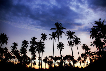 Palm tree with silhouette at sky.