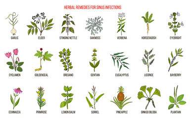 Best medicinal herbs to treat sinus infection Wall mural