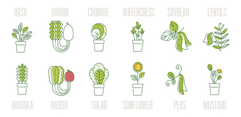 Big icon set of popular culinary herbs and vegitable. Basil, arugula, radishes, lettuce, cabbage, beans, mustard  etc. Vector illustration for tag label, food design.