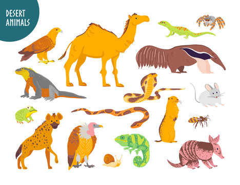 Vector collection of flat hand drawn desert animal, reptiles, insects: camel, snake, lizard isolated on white background. For children book illustration, alphabet, zoo emblems, banners, infographics.