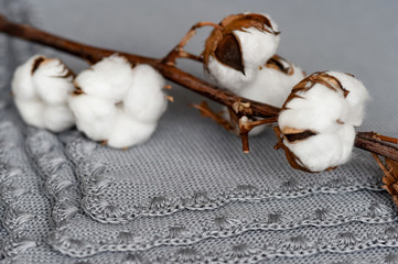 The natural gray plaid trimmed lace. On it lies a branch of cotton. Organic cotton clothing idea.