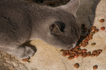 A street cat is fed cat food by tourists, Paphos - Cyprus
