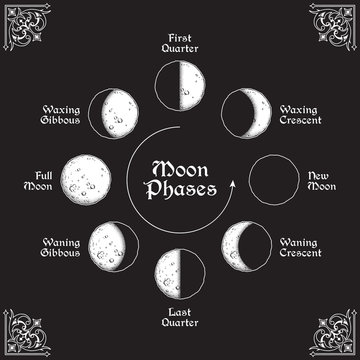 Antique style hand drawn line art and dot work moon phases circle. Boho poster, tattoo, altar veil or tapestry design vector illustration.