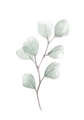 Photo sur Aluminium Illustration Aquarelle Silver dollar eucalyptus watercolor illustration