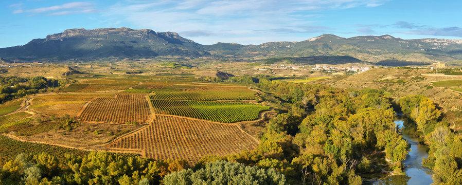 Landscape with vineyards at La Rioja, Spain