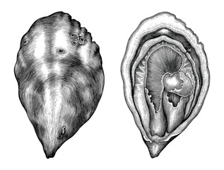 Antique engraving illustration of Oyster black and white clip art isolated on white background