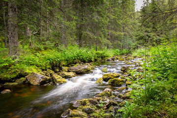 Beautiful and peaceful scene with a forest stream with moss rocks in green surroundings.