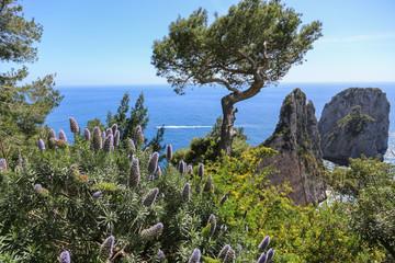 Capri Amalfi Küste: Traumhafte Vegetation und Aussicht auf die Faraglioni Felsen der Insel Capri