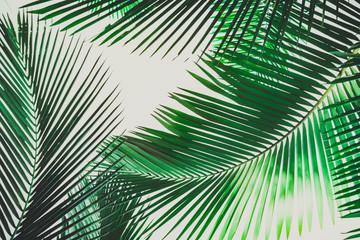 Coconut palm tree foliage. Vintage background. Retro toned poster.
