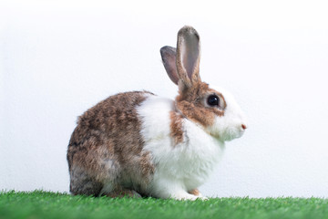 Cute young rabbit in  green lawn, white background