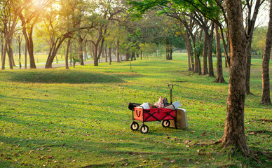 Red cart on fresh green lawn in city park, beautiful morning sunlight