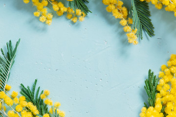 Wall Mural - Blue background with mimosa branch for spring holidays