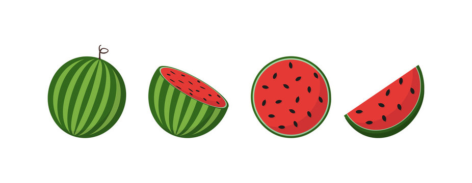 Fresh watermelon fruits, in different condition, vector